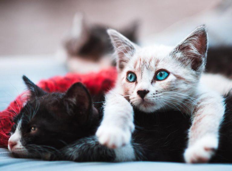 Koty potrzebują mokrej karmy w diecie i bardzo chętnie ją jedzą